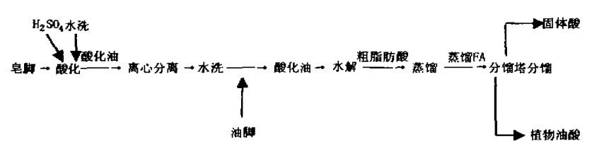 制取植物油酸工艺流程